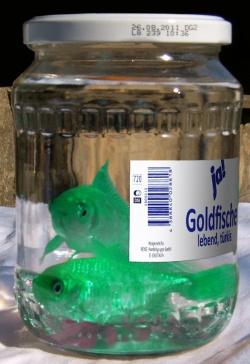 Gr ner goldfisch aquarium forum for Aquarium goldfische