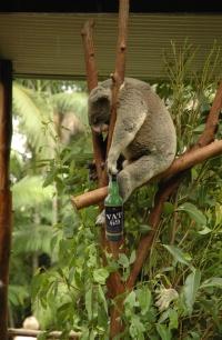 Koala Stupidedia