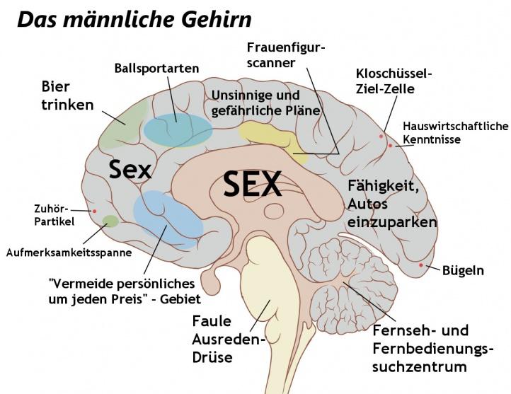 Gehirn - Stupidedia